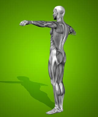 The most important element of human body posture